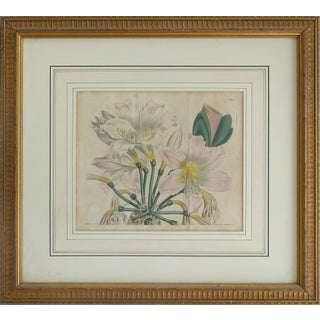 Hand Colored Antique Botanical Engraving For Sale