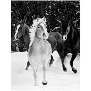 "21st Century Giclee Print Photograph ""Three Horses in Snow"", Janet Mesic Mackie For Sale"