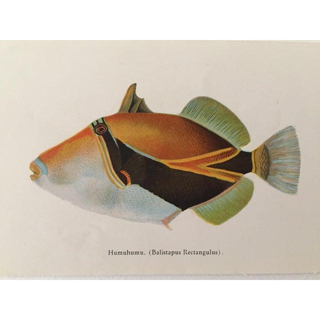 Hawaiian Fish Lithographs - A Pair - Image 4 of 5