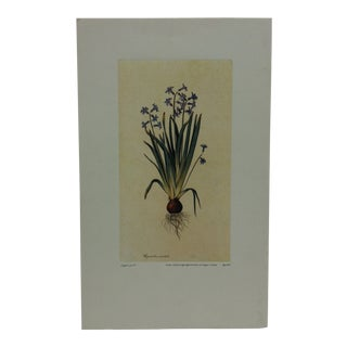 "Original Color Floral Print ""Tyacinthus Ouinlalis"" by J. Ligozzi Printed in Italy For Sale"