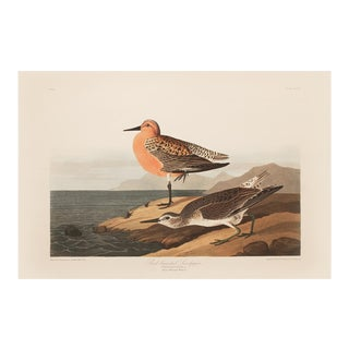 1990s Red-Breasted Sandpiper by Audubon, Large Cottage Style Print For Sale