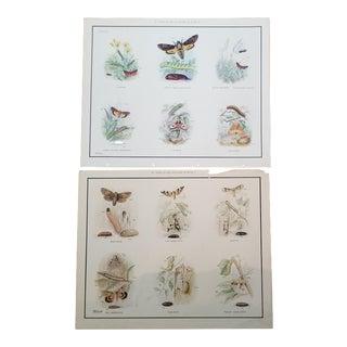 Vintage School Teaching Poster Moths - a Pair For Sale