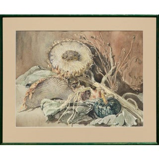Evelyn Kok Dried Sunflower Still Life Maine Artist 1970s For Sale