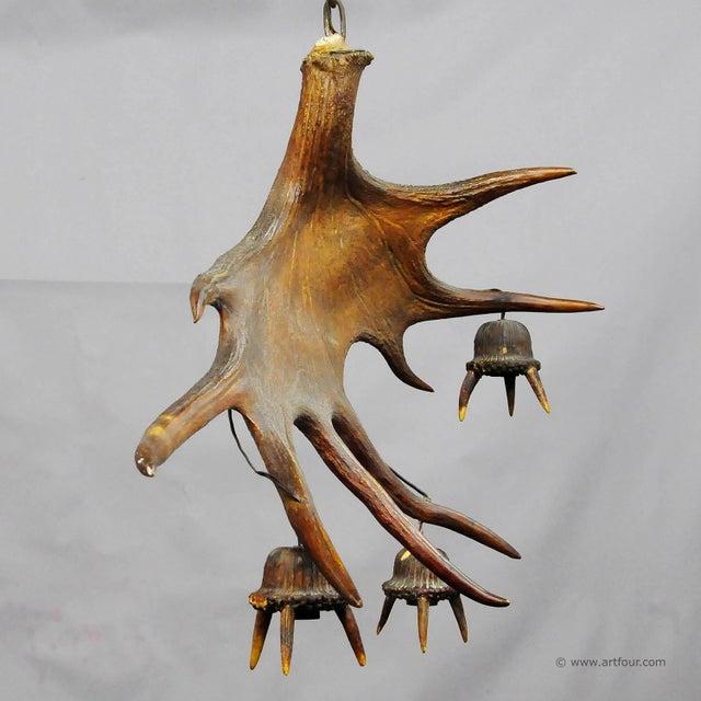 Folk Art A Large Sculptural Antique Moose Antler Chandelier For Sale - Image 3 of 5