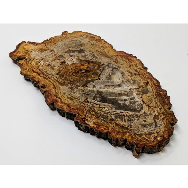 Arhaus Arhaus Inspired Petrified Wood Tray For Sale - Image 4 of 10