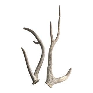 Vintage Worn/Weathered Elk Horns - a Pair For Sale