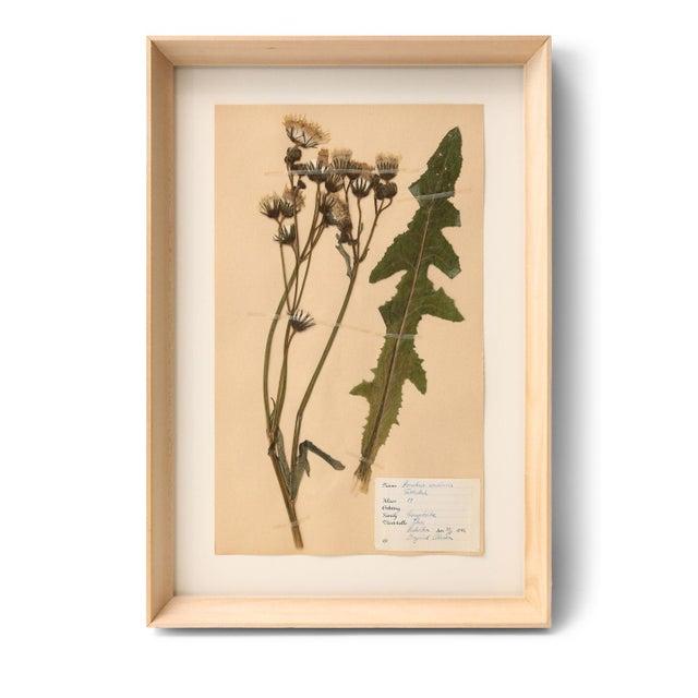 Wood Ten Vintage Swedish Herbaria For Sale - Image 7 of 13