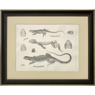 Original Antique Lithograph of Lizzard Species of California C. 1855 For Sale