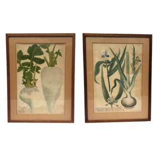 Early 18th Century Antique Weinmann Framed Scientific Botanical Engravings - A Pair For Sale