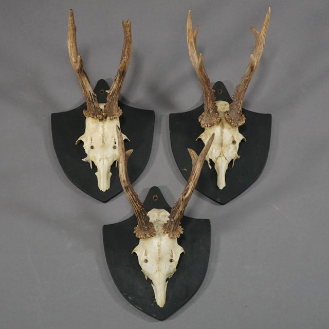 Six Large Antique Deer Trophies on Wooden Carved Plaques Ca. 1870 For Sale - Image 4 of 8