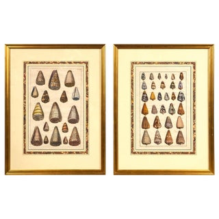 Pair of Framed Hand-Colored Lithographs of Shell Species, 19th Century For Sale