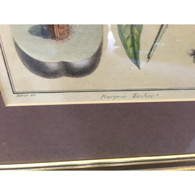 Early 19th Century Antique Botanical Prints - Set of 3 For Sale - Image 5 of 9
