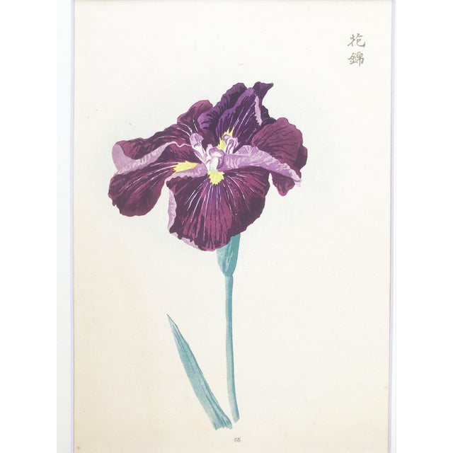 1900s Japanese Iris Woodblock Botanical Print C.1900 For Sale - Image 5 of 9