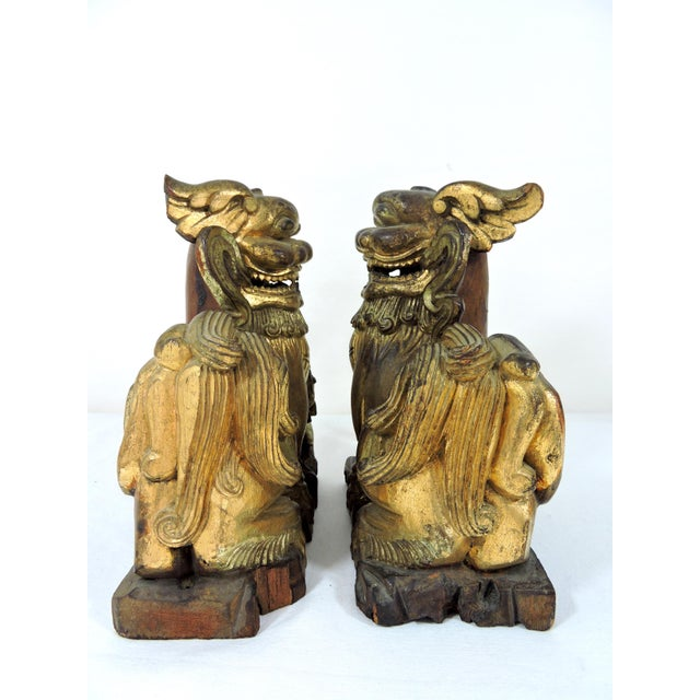 Early 20th Century Antique Chinese Carved Gilt Wood Temple Foo Lions- a Pair (Foo Dogs) For Sale - Image 5 of 9