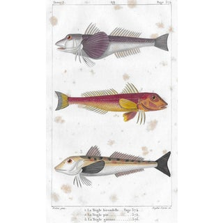 French 19th Century Fish Print For Sale