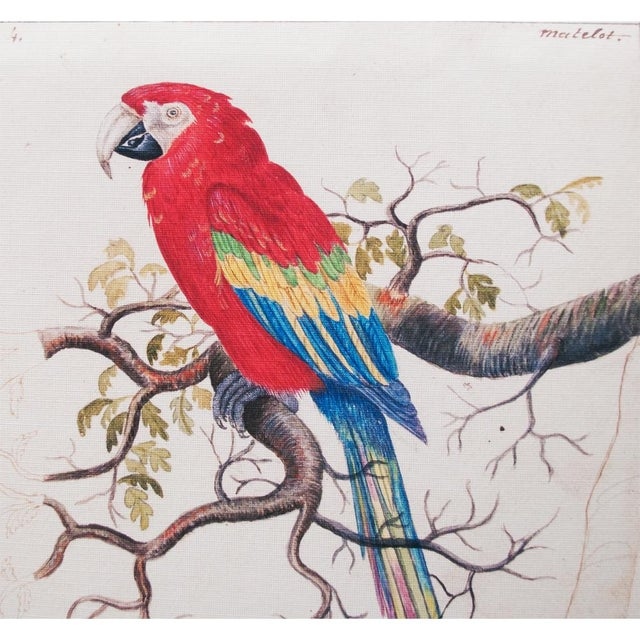 A beautiful reproduction print after original lithograph of Scarlet Macaw by Anselmus Boëtius de Boodt (1550 - 1632),...