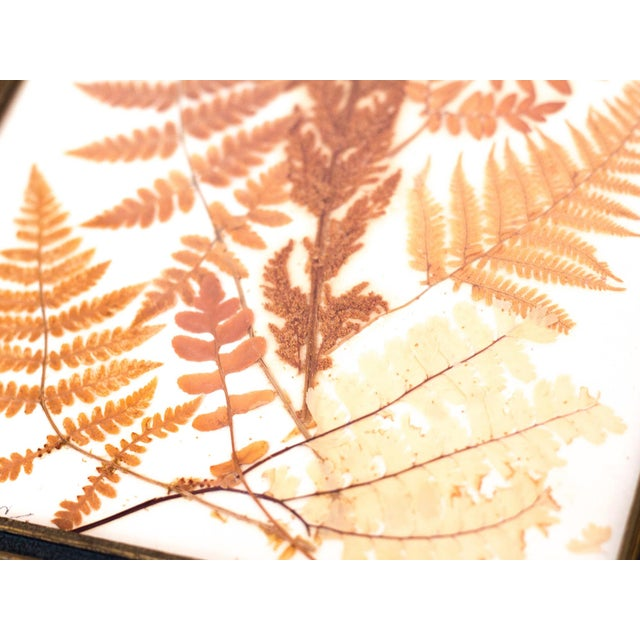 Pressed Fern Wall Hanging - Image 2 of 5