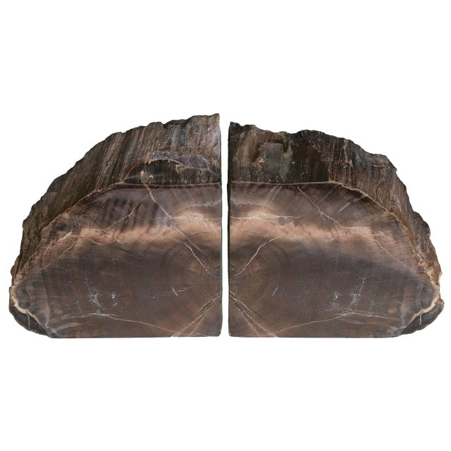Rare Bookmatched Black Petrified Wood Polished Monolithic Bookends For Sale