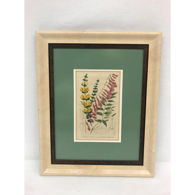 19th Century English Floral Print For Sale In Greensboro - Image 6 of 6