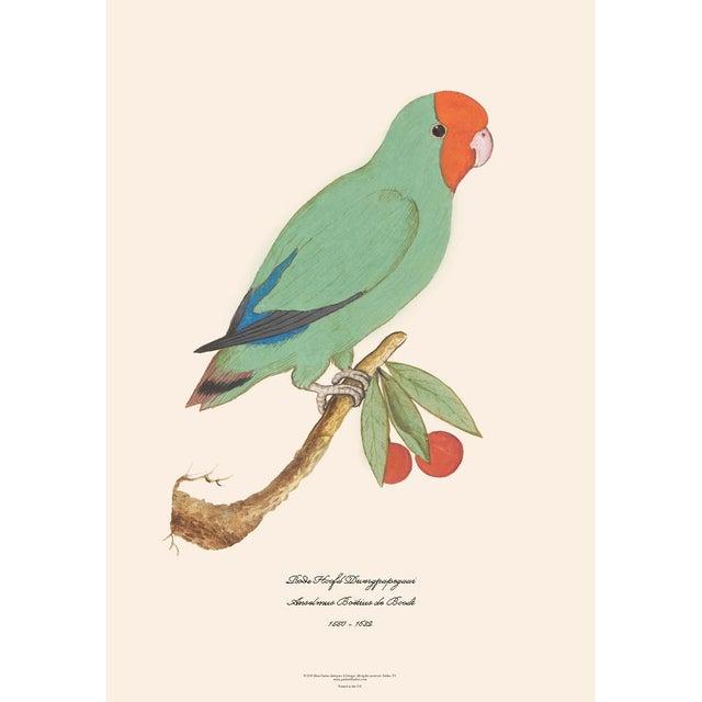 Set of 4 extra large gorgeous reproduction prints after watercolors of Parrots & Parakeets by Anselmus Boëtius de Boodt...