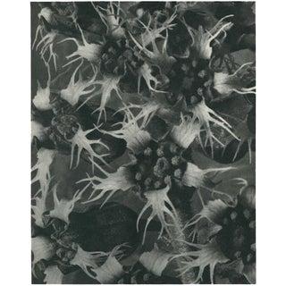 1928 Karl Blossfeldt Original Period Photogravure N120 of Ballota Acuta Preview