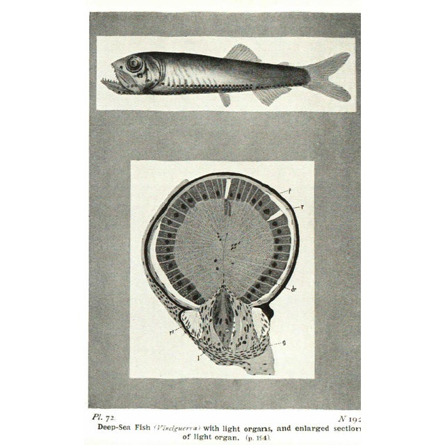 1920s 1928 The Seas Hardcover Book with Illustrations For Sale - Image 5 of 6