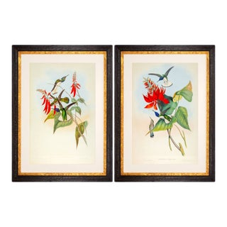 1990s John Gould Framed Prints, Hummingbird (Plates 113 & 114) - a Pair For Sale