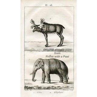 Reindeer and Elephant, 1816 French Engraving For Sale