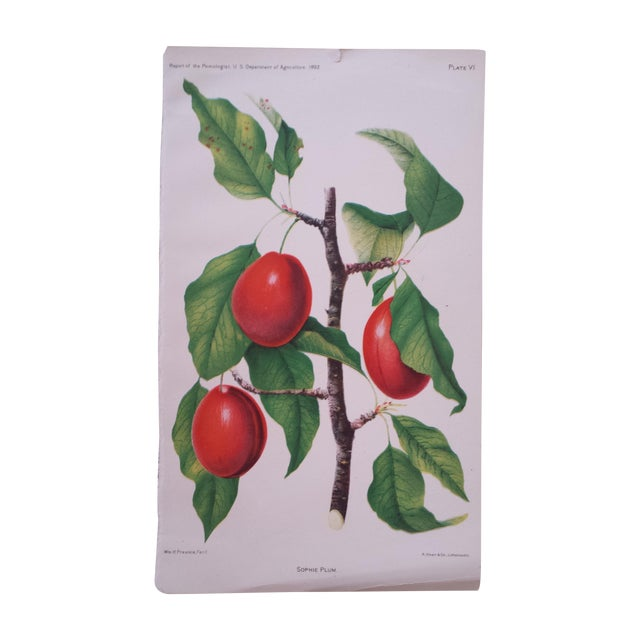 Antique 1892 Sophie Plum Lithograph - Image 1 of 3