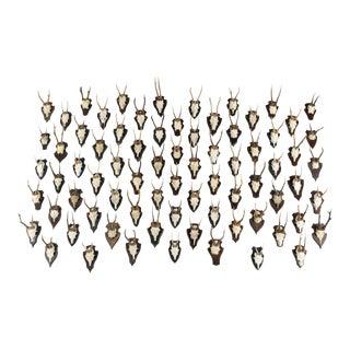 Vintage German Roe Deer Antlers, Set of 75