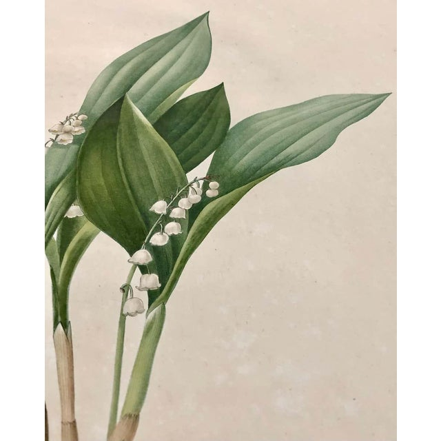Convallaria Majalis Print Hand Colored Engraving Signed p.j. Redoute For Sale - Image 4 of 13