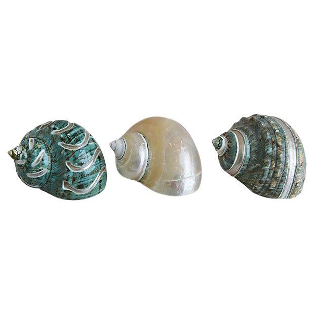 Ivory, Jade & Turquoise Seashells - Set of 3 For Sale