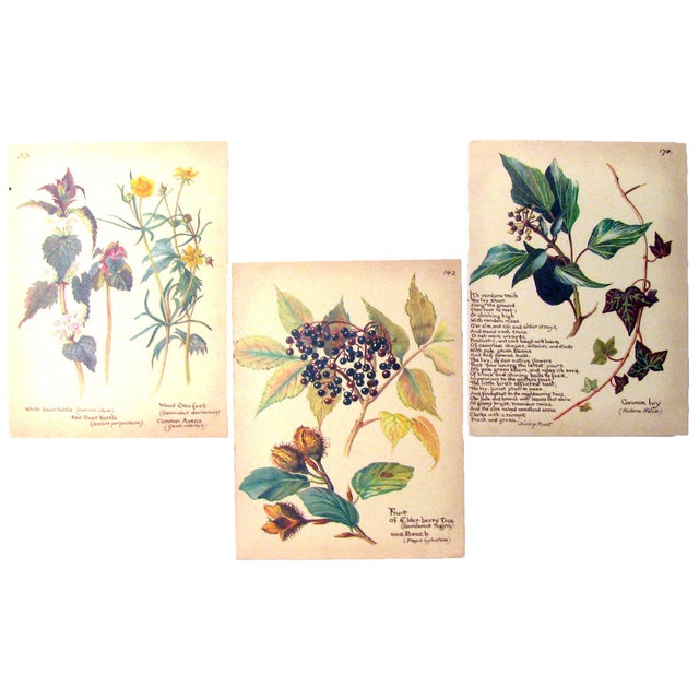 Early 20th Century Vintage English Botanical Prints, S/3 For Sale - Image 5 of 5