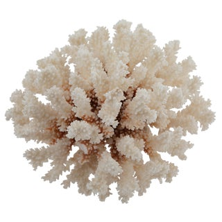Vintage White Coral on Acrylic Stand