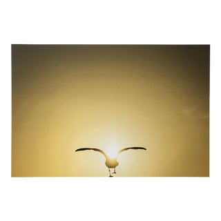 Seagull & the Sunset Photograph For Sale