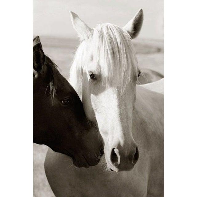 Edelman Sermo Per Equus Lindisimo Photograph - Image 1 of 4