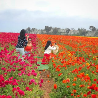 Flower Fields Photograph For Sale