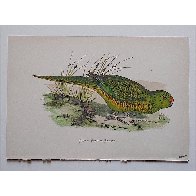 This 19th century lithograph is from a series that vibrantly depicts a variety of tropical birds. They are...