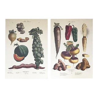 Vintage Album Vilmorin Botanical Fine Art Prints - a Pair For Sale