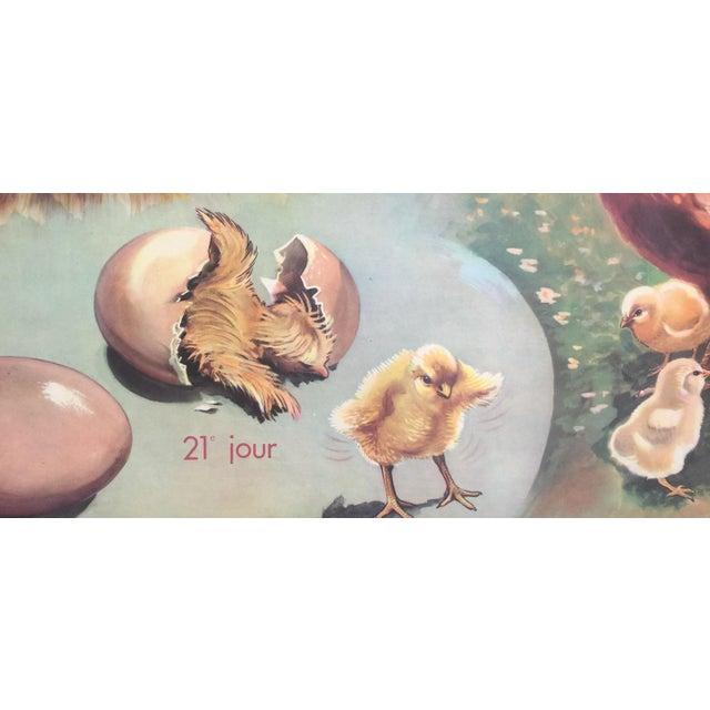 Vintage French Hen & Egg Poster - Image 4 of 6
