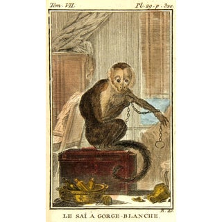"Consigned Le Sai Gorge-Blanche ""Monkey"" Engraving C. 1780 For Sale"