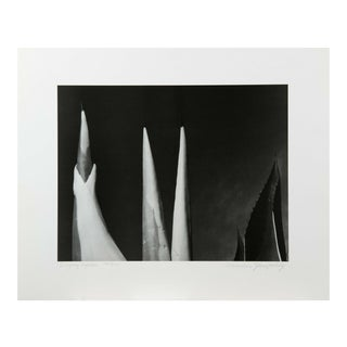 """Mariana Yampolsky """"Maguey Capado"""" Lithographic Photo Print Limited 28/250 Signed For Sale"""