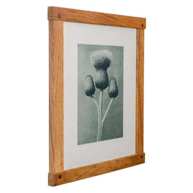 Karl Blossfeldt Photogravures in Handcrafted Wormy Oak Frames, C.1929 - Set of 5 For Sale - Image 11 of 13
