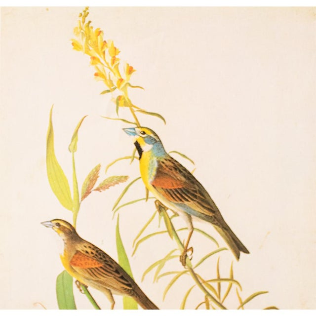 American 1966 Black-Throated Bunting & Dickcissel by John James Audubon, Cottage Style Lithograph For Sale - Image 3 of 8