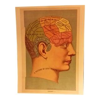 Phrenology Head Chart Reprint