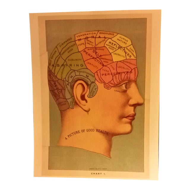 Phrenology Head Chart Reprint - Image 1 of 5