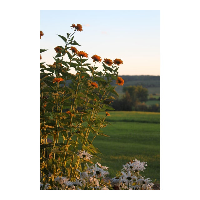 Photography of Wildflowers at Sunset by Josh Moulton For Sale