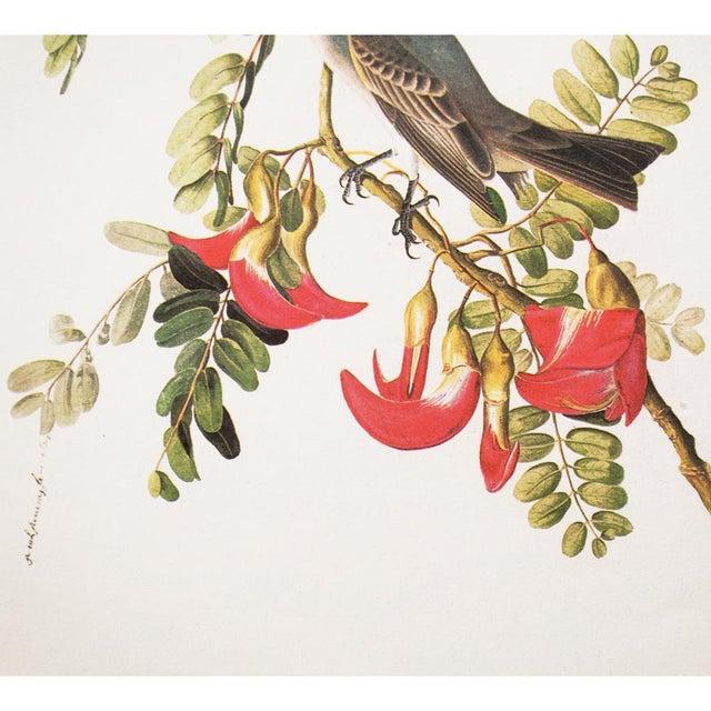 1960s 1966 Gray Kingbird by John James Audubon For Sale - Image 5 of 10