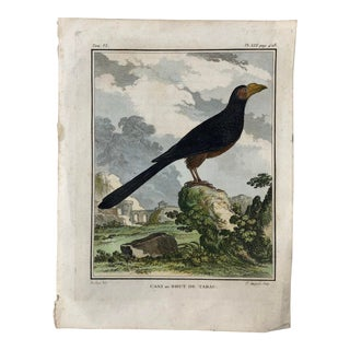 18th Century French Bird Engraving Signed by Jacques De Sève Featuring an Anis For Sale