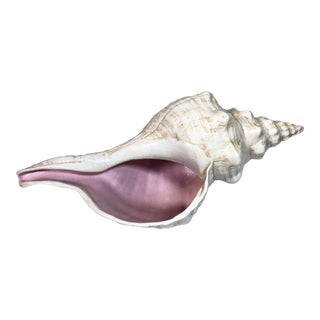 Vintage Decorative Conch Shell For Sale